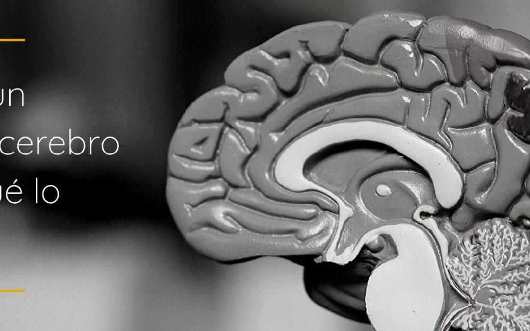 ¿Qué es un segundo cerebro y para qué lo necesito?